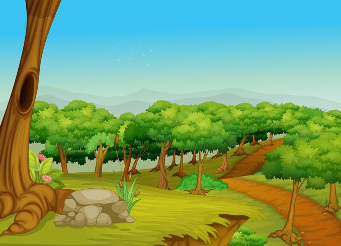 Sentiero nel bosco incantevole