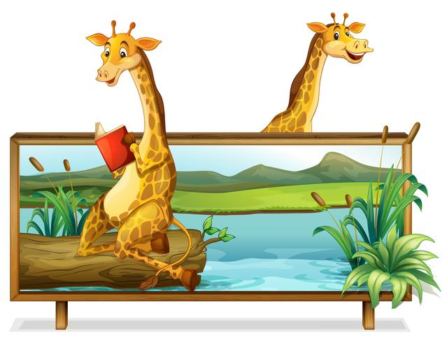 Two giraffe by the lake