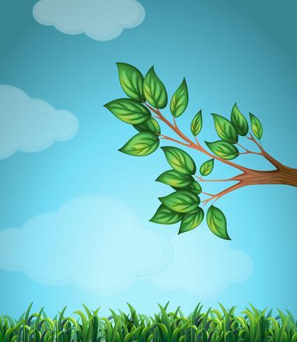 Scen med gren och gräs