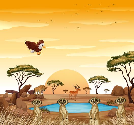 Escena con suricatas y otros animales en campo. vector