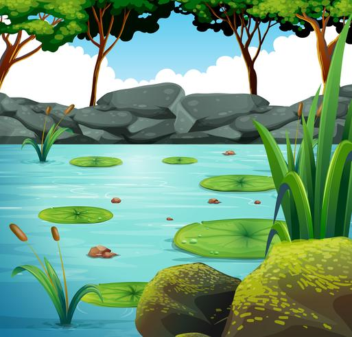 Scène met waterlelie in de vijver