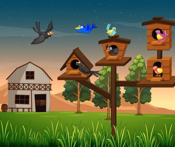 Muchas aves en pajarera en la granja