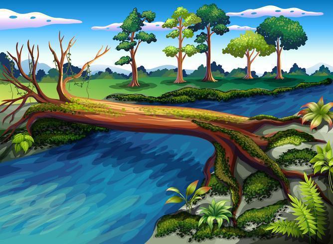 Ett träd med alger vid floden