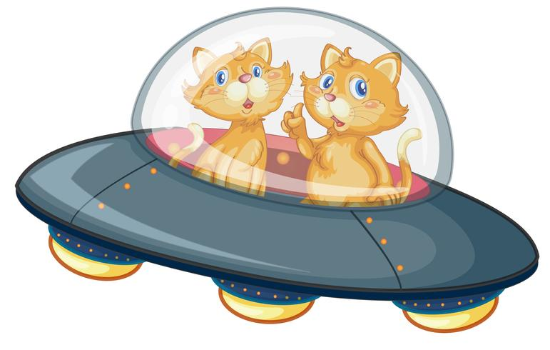 A cat in ufo on white background