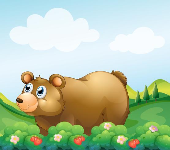 Um urso pardo no jardim de morango