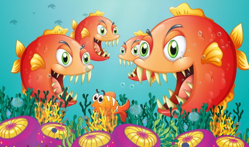 Uma escola de piranha no fundo do mar