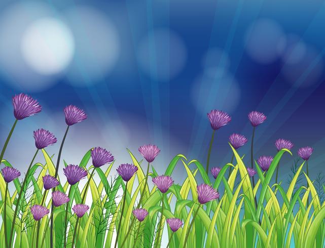 Ein Garten mit frischen violetten Blumen