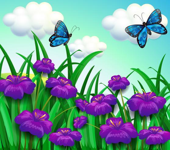 Dos mariposas azules en el jardín con flores violetas.