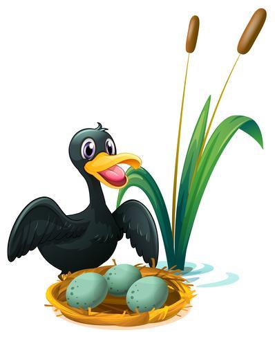 Un canard près du nid avec des oeufs