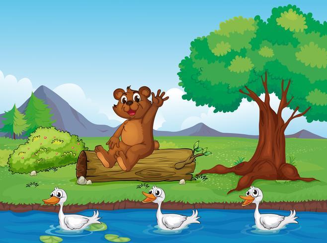 Ein lächelnder Bär und Enten