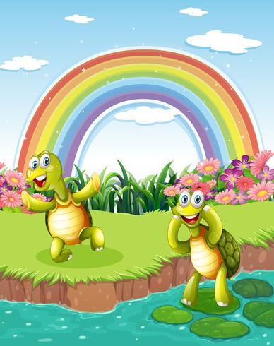 Twee speelse schildpadden bij de vijver met een regenboog in de lucht