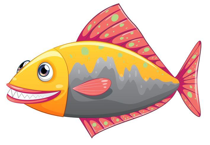 A colorful big fish