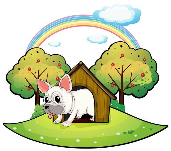 Un cane dentro la casa del cane con un melo sul retro
