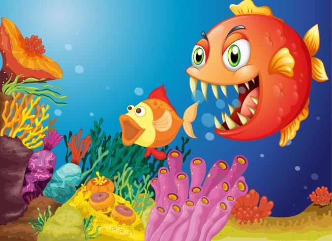 Barriere coralline colorate con due pesci