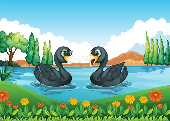 Un rio con dos patos.