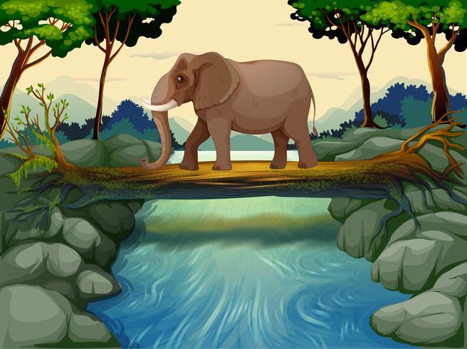 En elefant som passerar floden