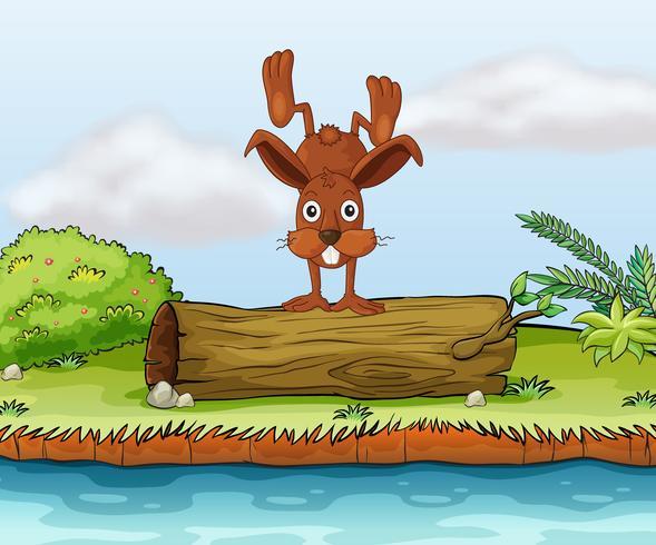 Kaninchen auf einem Baumstamm