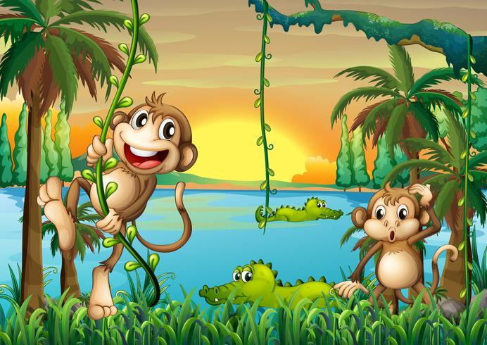 Um lago com crocodilos e macacos jogando