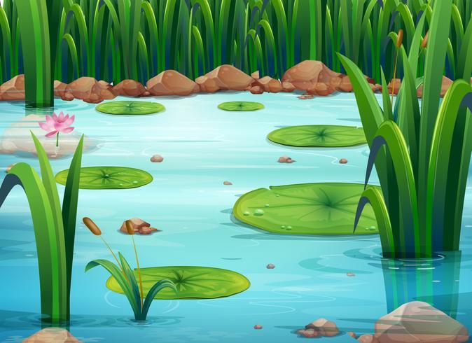 Un estanque con plantas verdes.