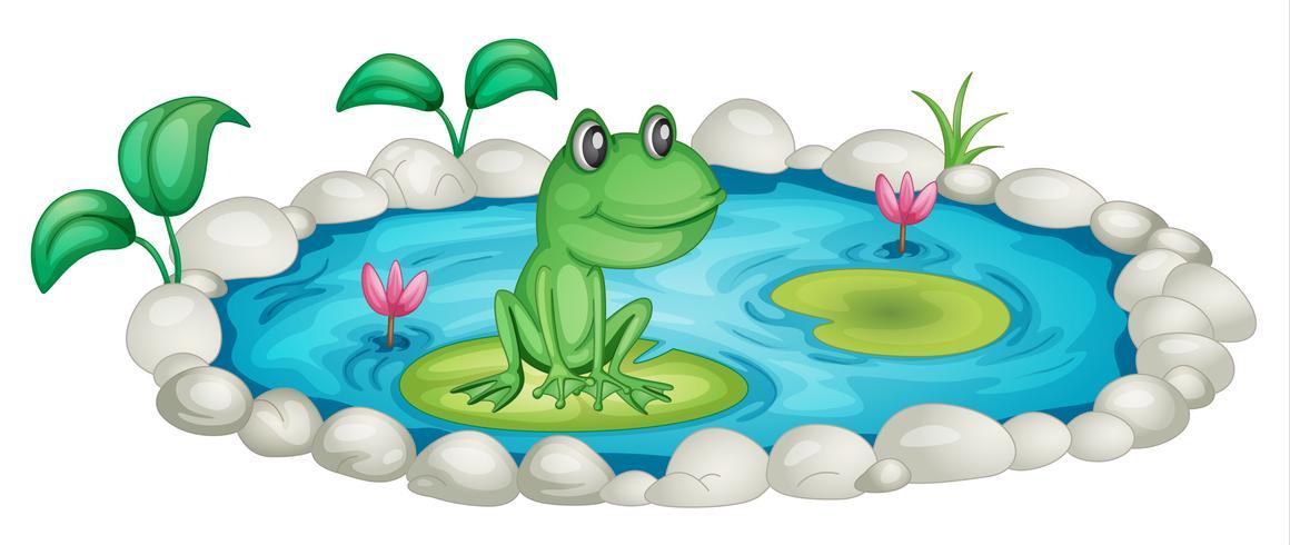 Rana en un estanque