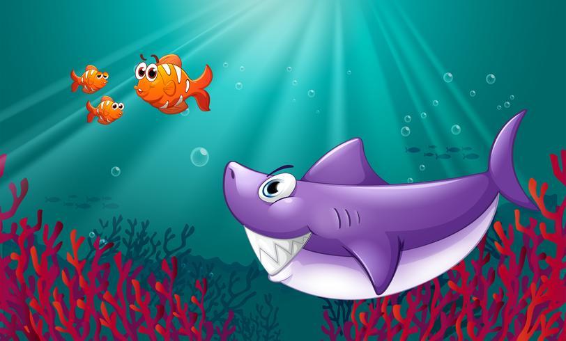Un grande squalo e tre nemos sotto il mare