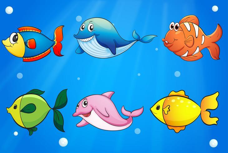 Sex färgglada och leende fiskar under havet