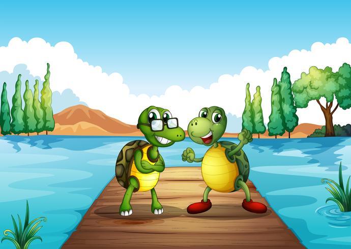 Två sköldpaddor som står vid dykbrädet