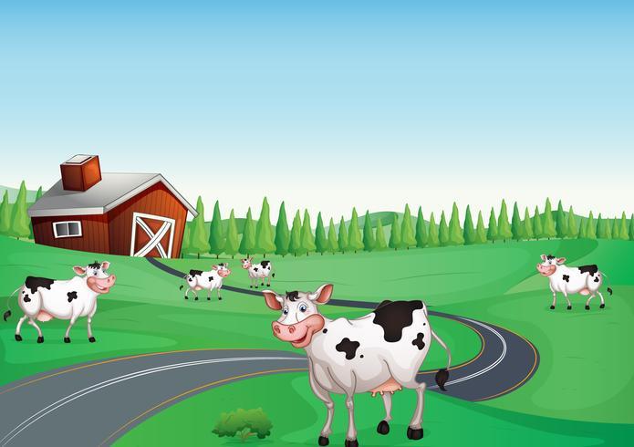 casa e mucca