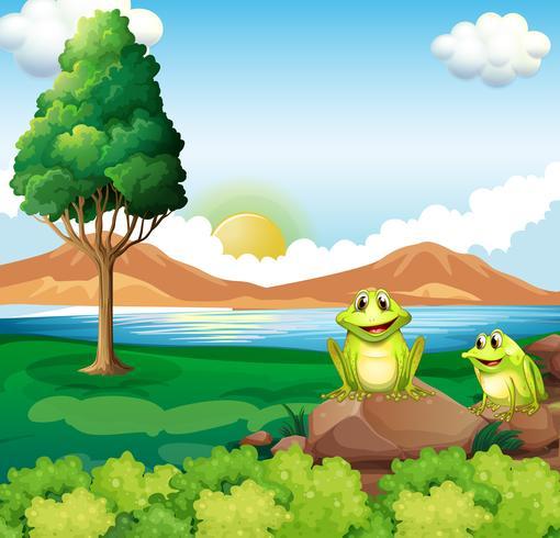 Twee kikkers boven de rots dichtbij de rivier