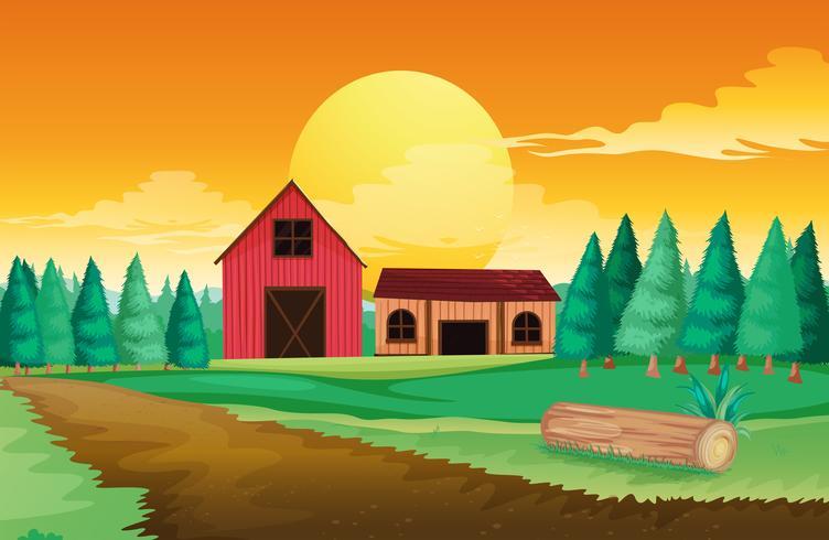 Farm houses near the pine trees