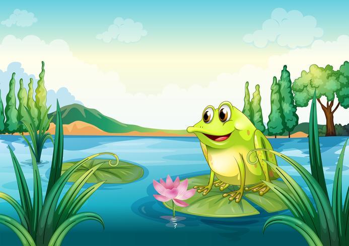 Een kikker bij de rivier