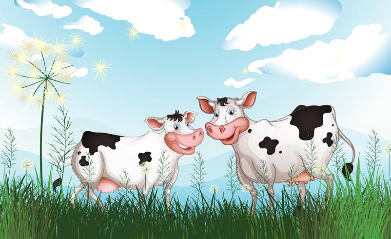 Två kor på gräsmarken