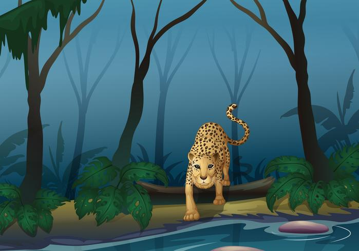 A leopard in the middle of the forest