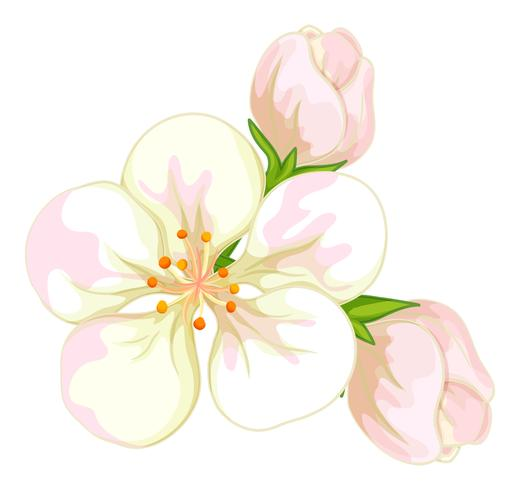Flores blancas sobre fondo blanco