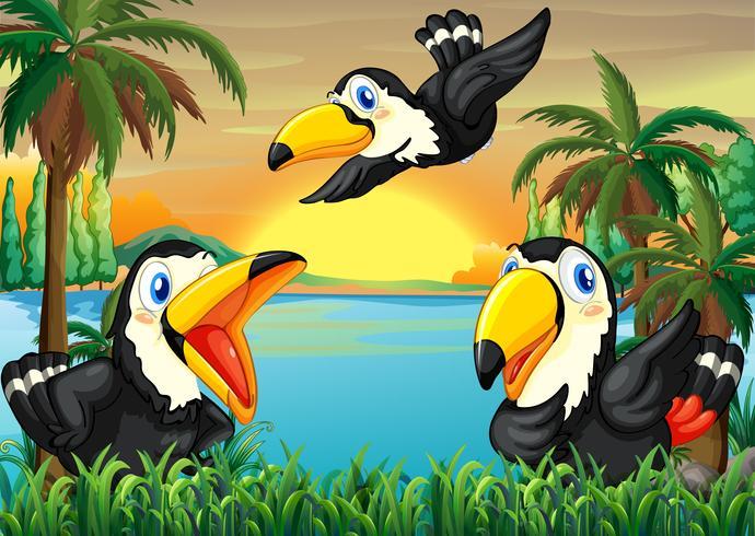 Tre uccelli selvatici vicino al fiume