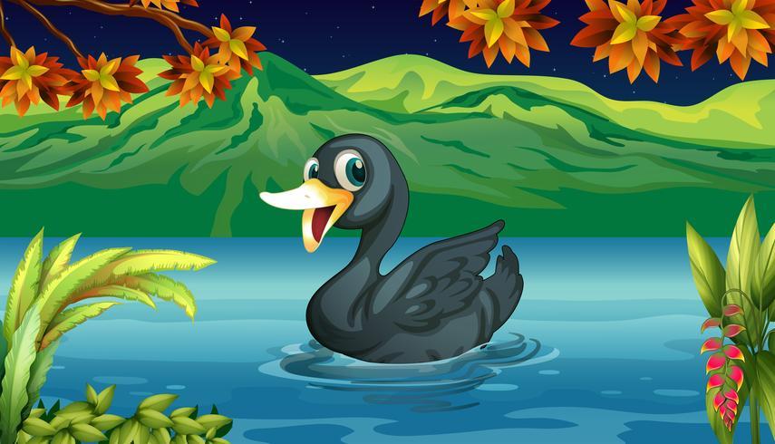 Een zwarte zwaan op het meer
