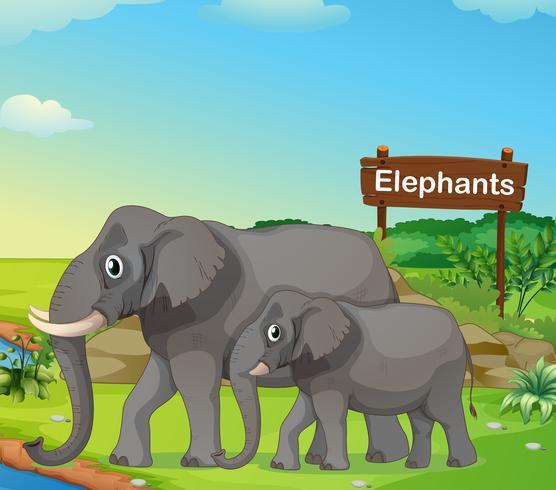 Een kleine en grote olifant met een uithangbord