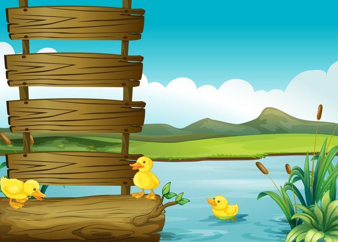 Ducklings beside an empty signboard in the river