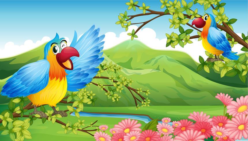 Dois papagaios coloridos em um cenário de montanha