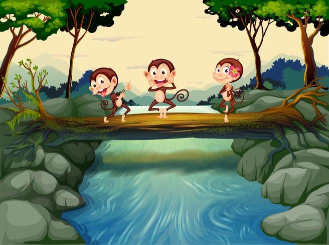 Trois singes traversant la rivière
