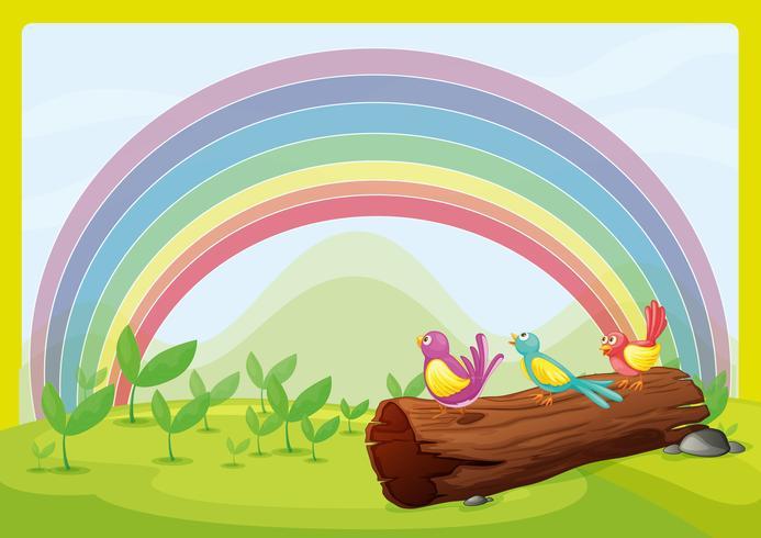 Uccelli che guardano l'arcobaleno