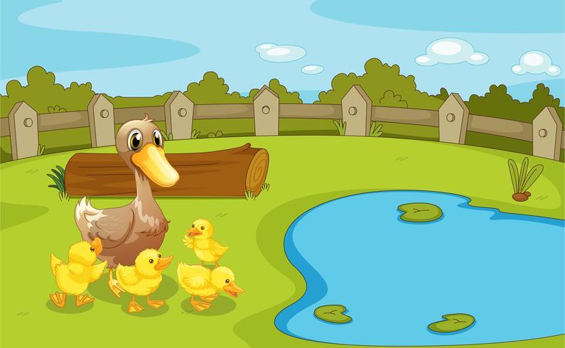 Patos perto do pequeno lago