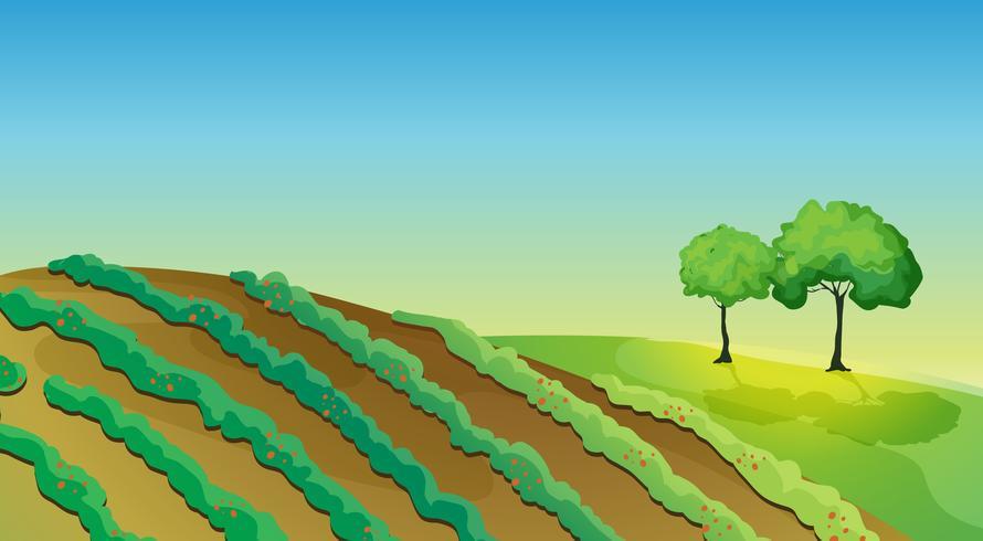 Terres agricoles et arbres