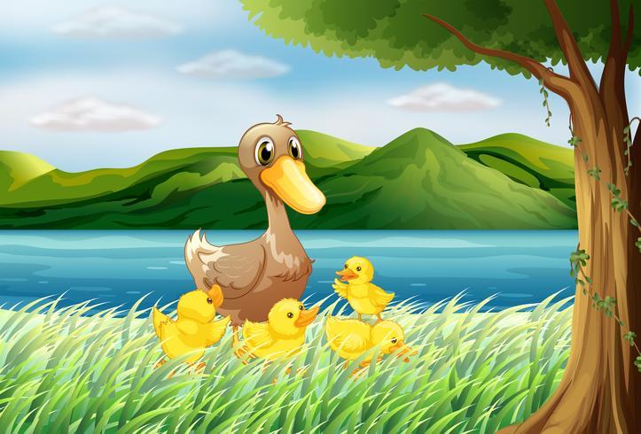 Cinq canards au bord de la rivière