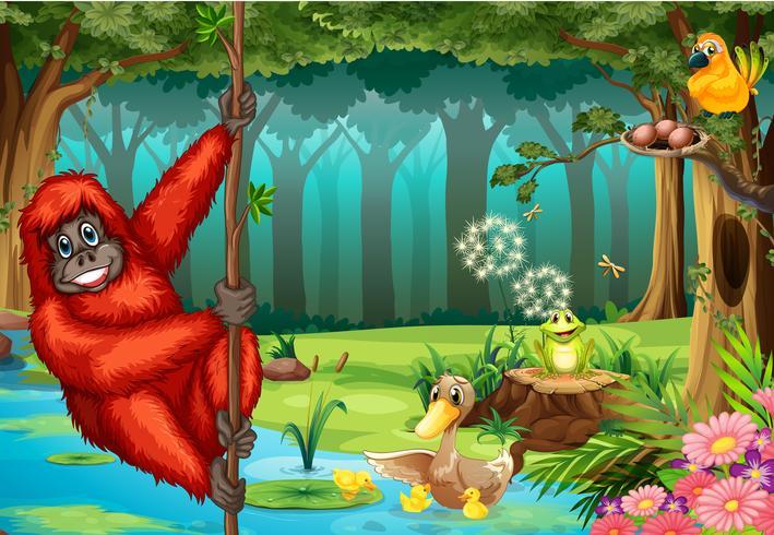 Orangutan i djungeln