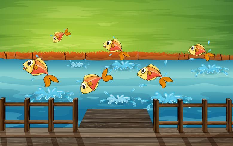 Eine Fischschwarm