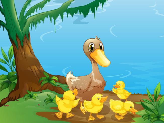 Eine Ente und ihre Entlein am Flussufer