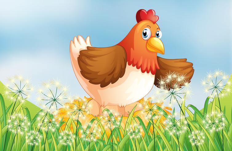 Una gallina poniendo huevos
