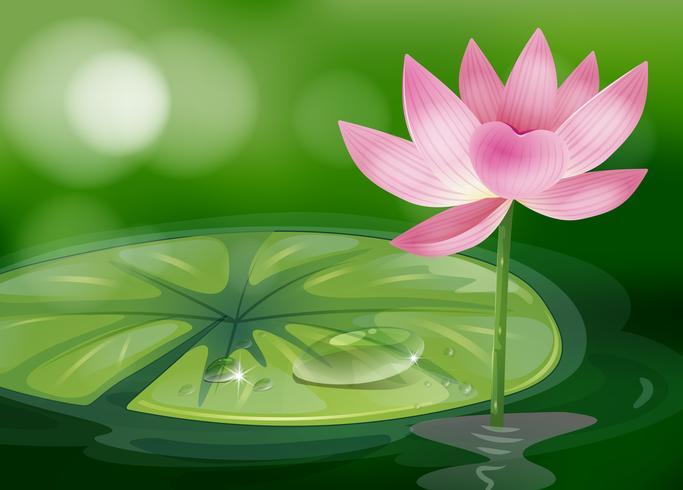Une fleur rose à l'étang