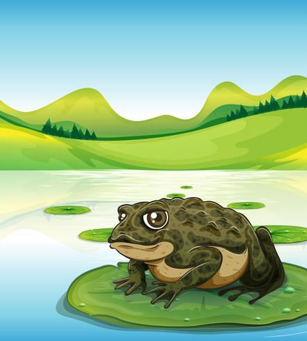 Frog and pond vector